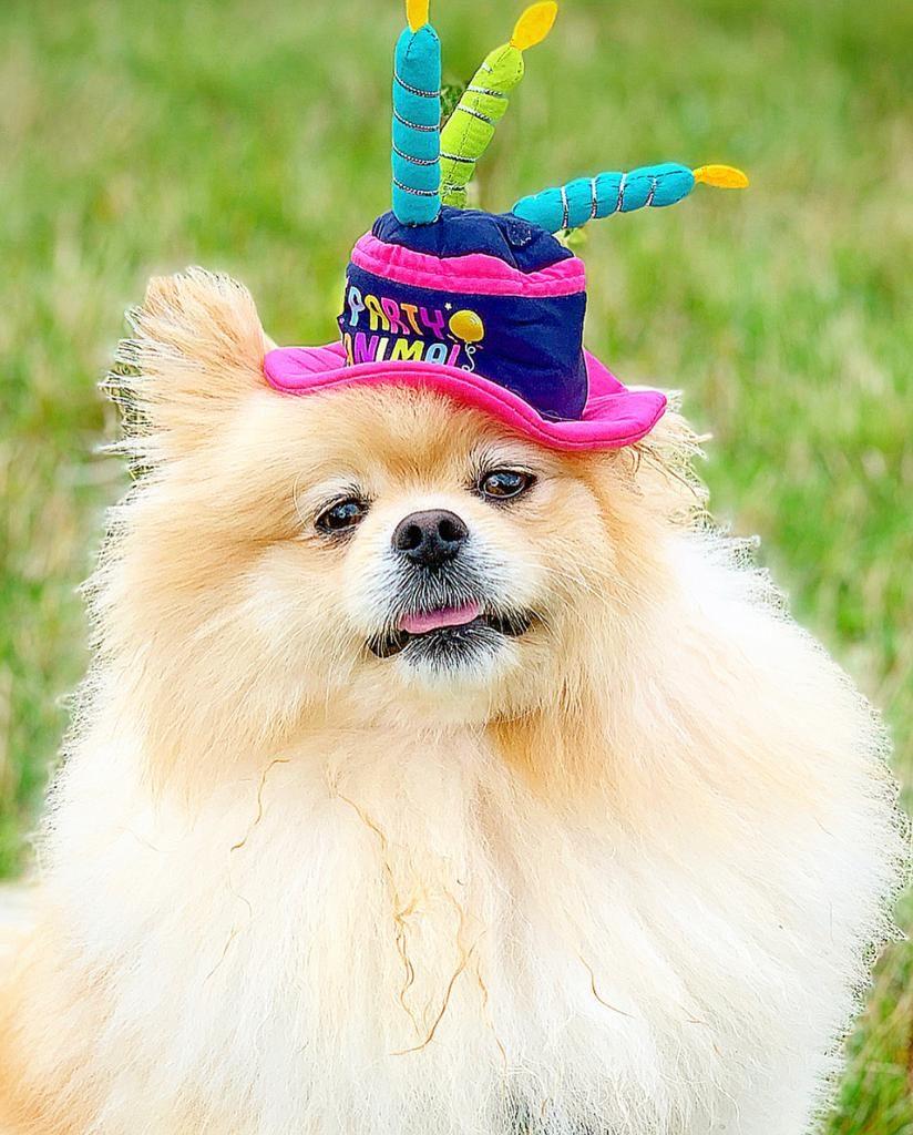 It's my Birthday!! I'm 2 today.
